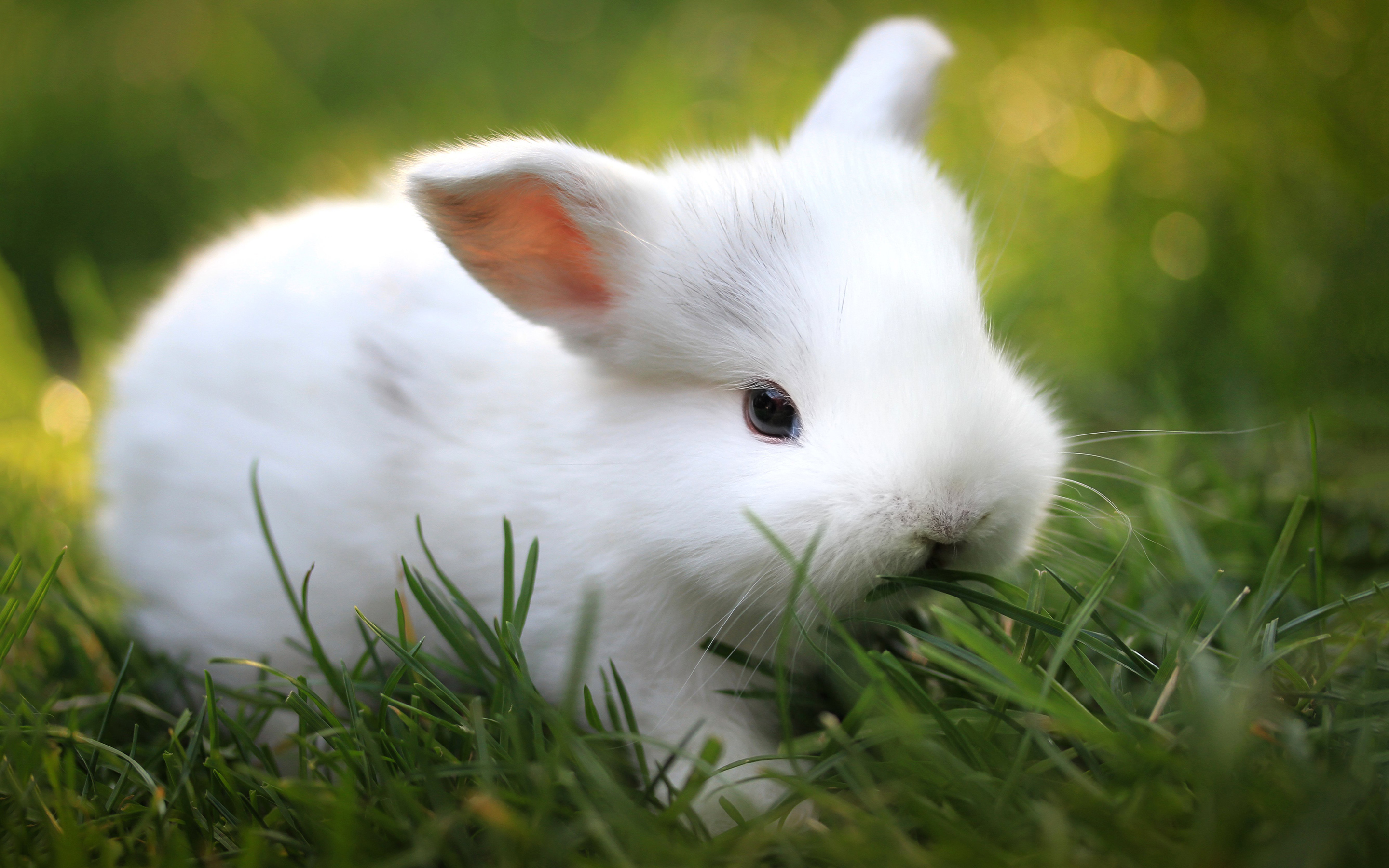White Cute Bunny Wallpaper