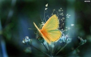Yellow Butterfly Wallpaper Windows