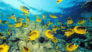 Yellow Fish Wallpaper Desktop