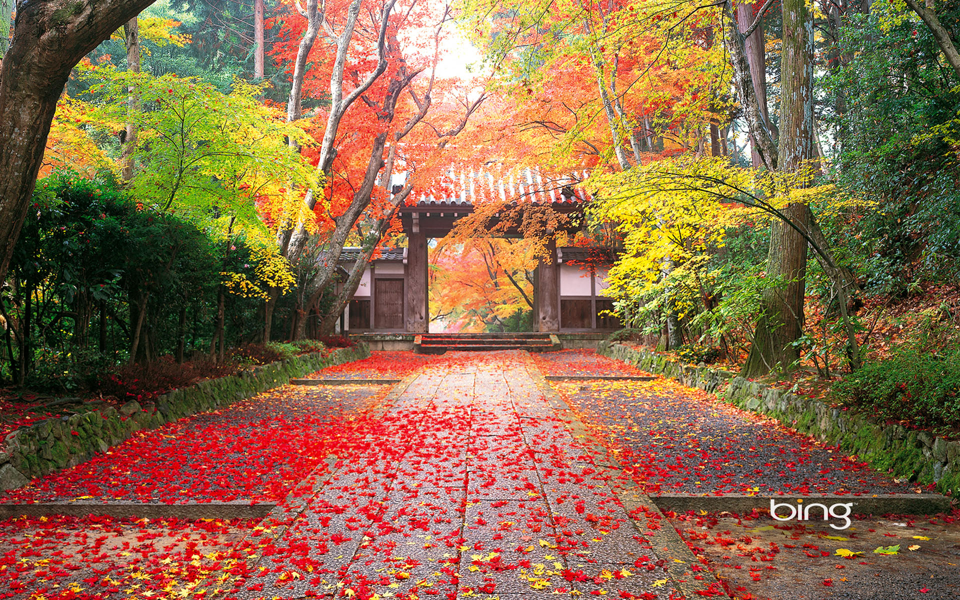 Autumn Japan Wallpaper PC