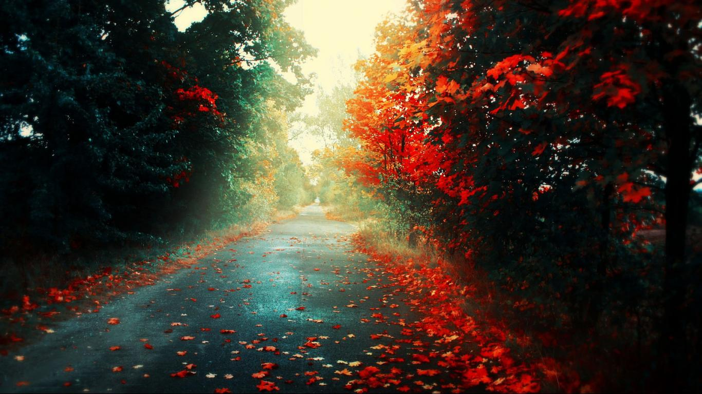 Fall Wallpaper Spring Beautiful HD