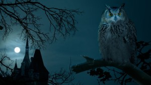 Owl Halloween Animals Wallpaper