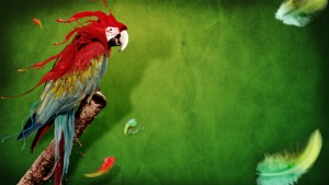 Bird Color Background