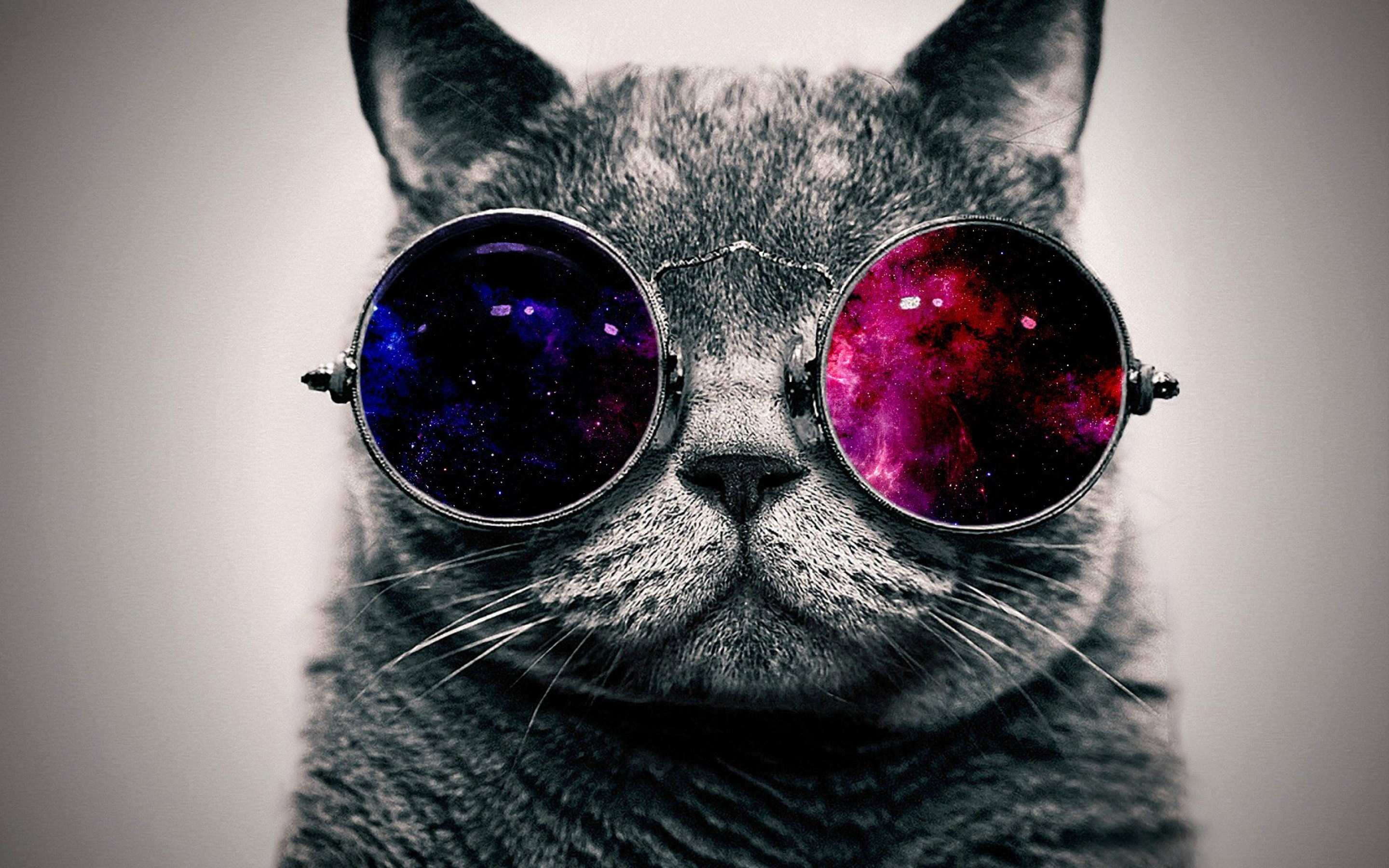 Cat Cool Wallpaper
