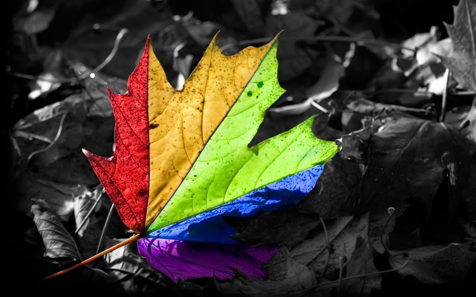 Cool Autumn Wallpaper