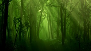 Dark Forest Fantasy Wallpaper