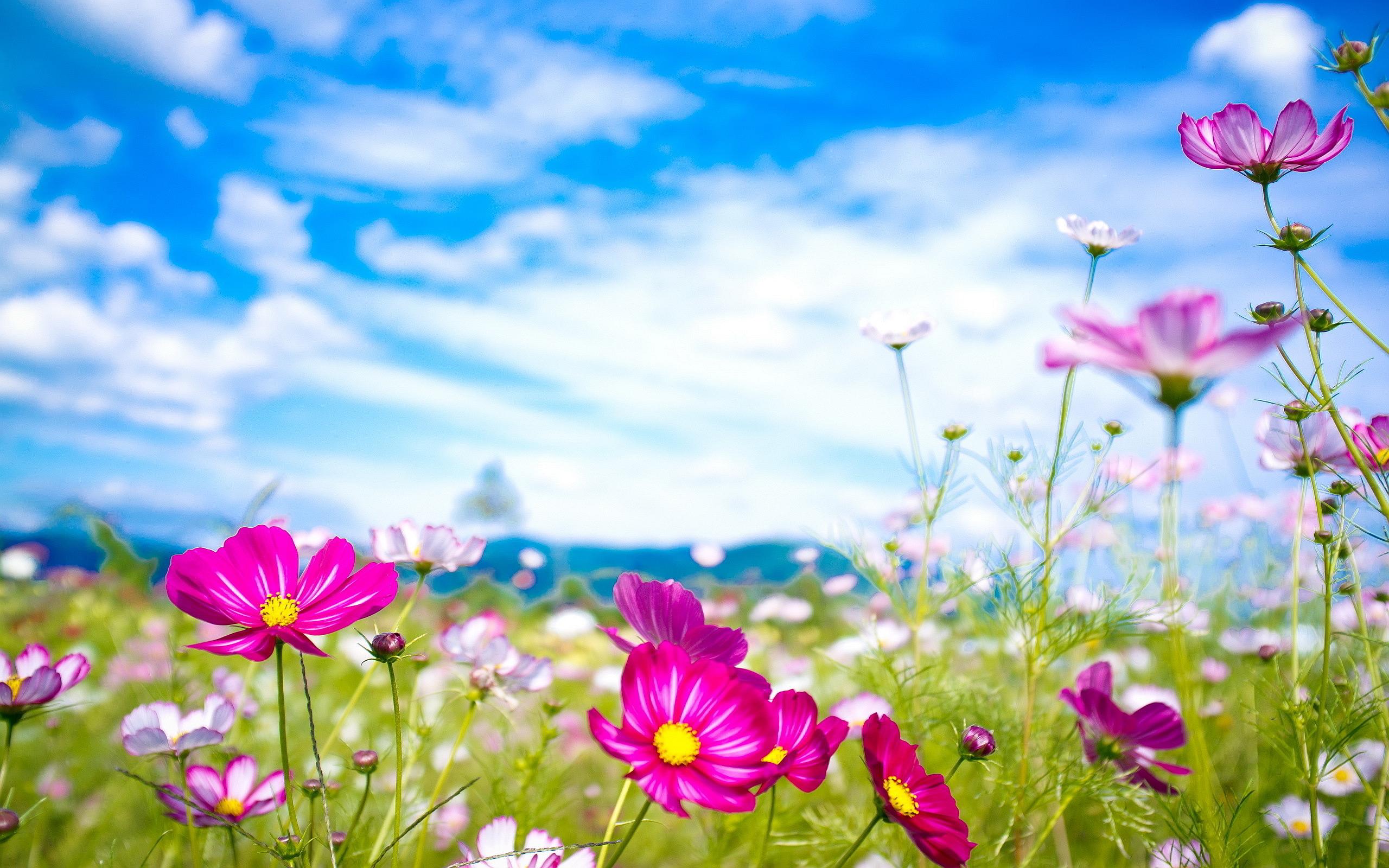 Flower Art Image