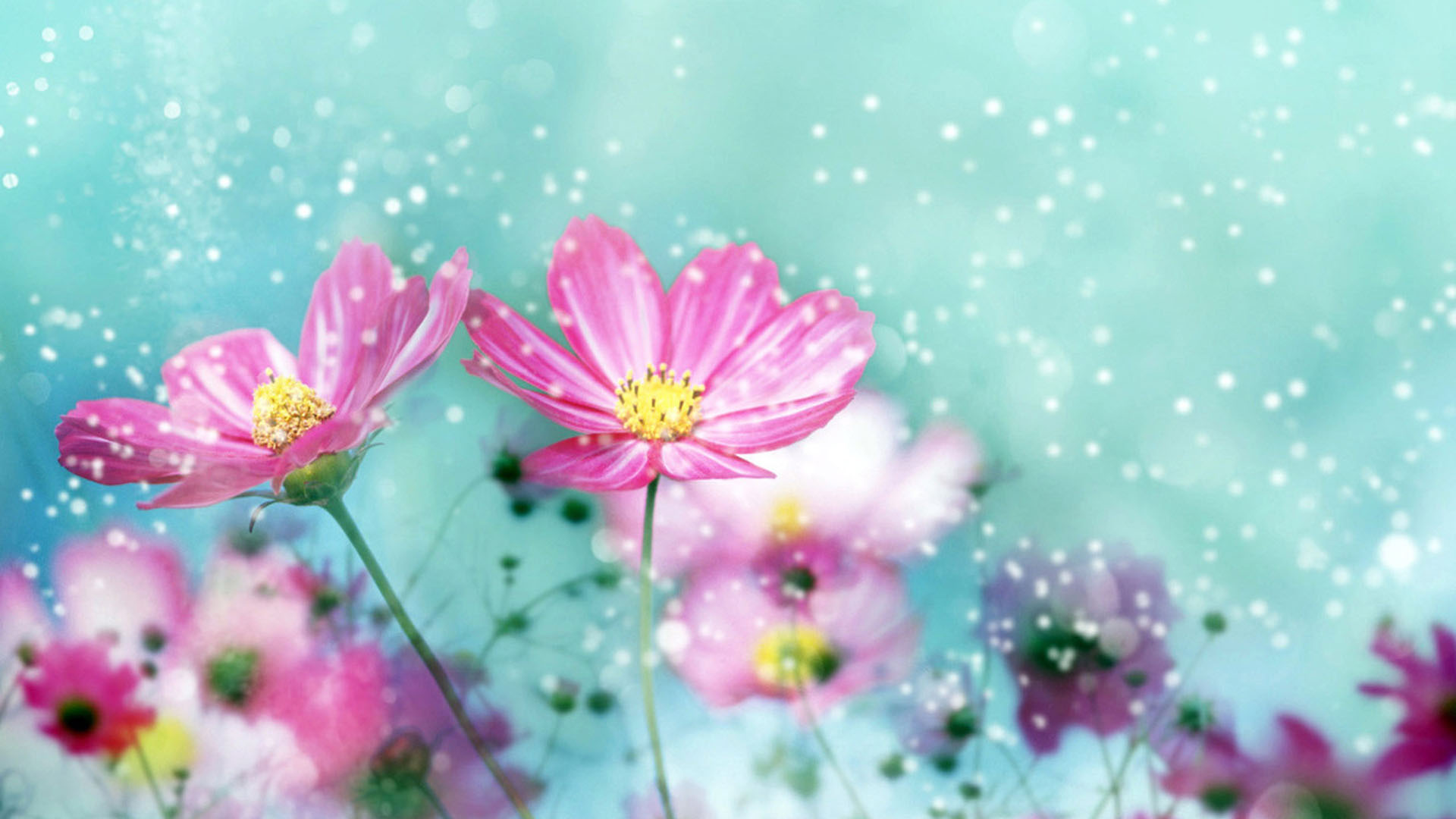 Flower Desktop 1920×1080