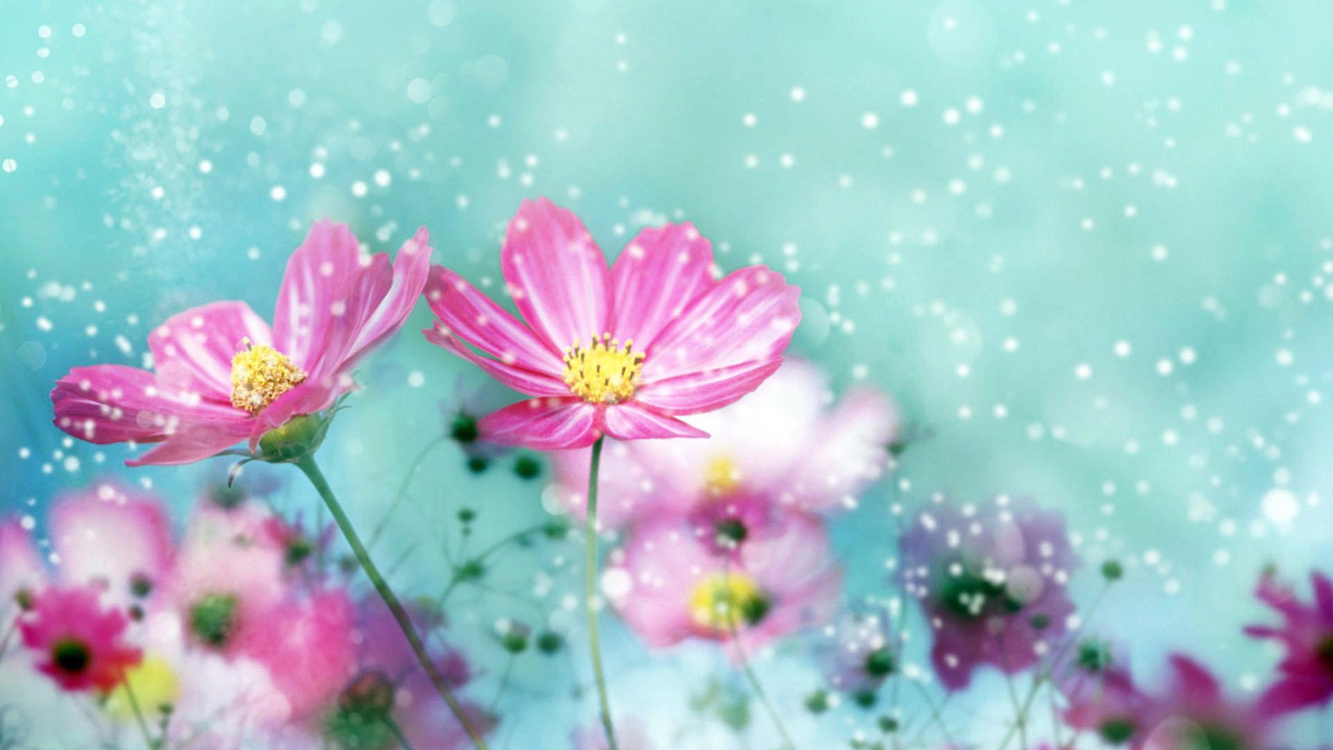 Flower Desktop 1920×1080