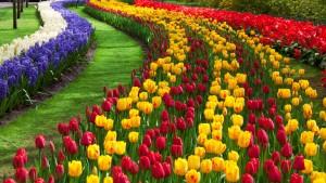Flower Garden Walpaper