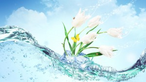 Flower Water Wallpaper