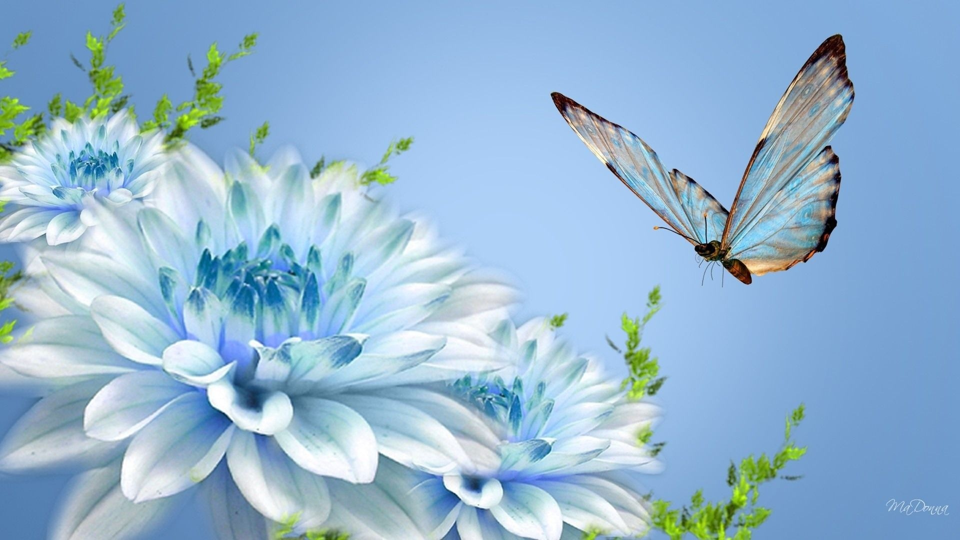 Flowers Blue Wallpaper HD
