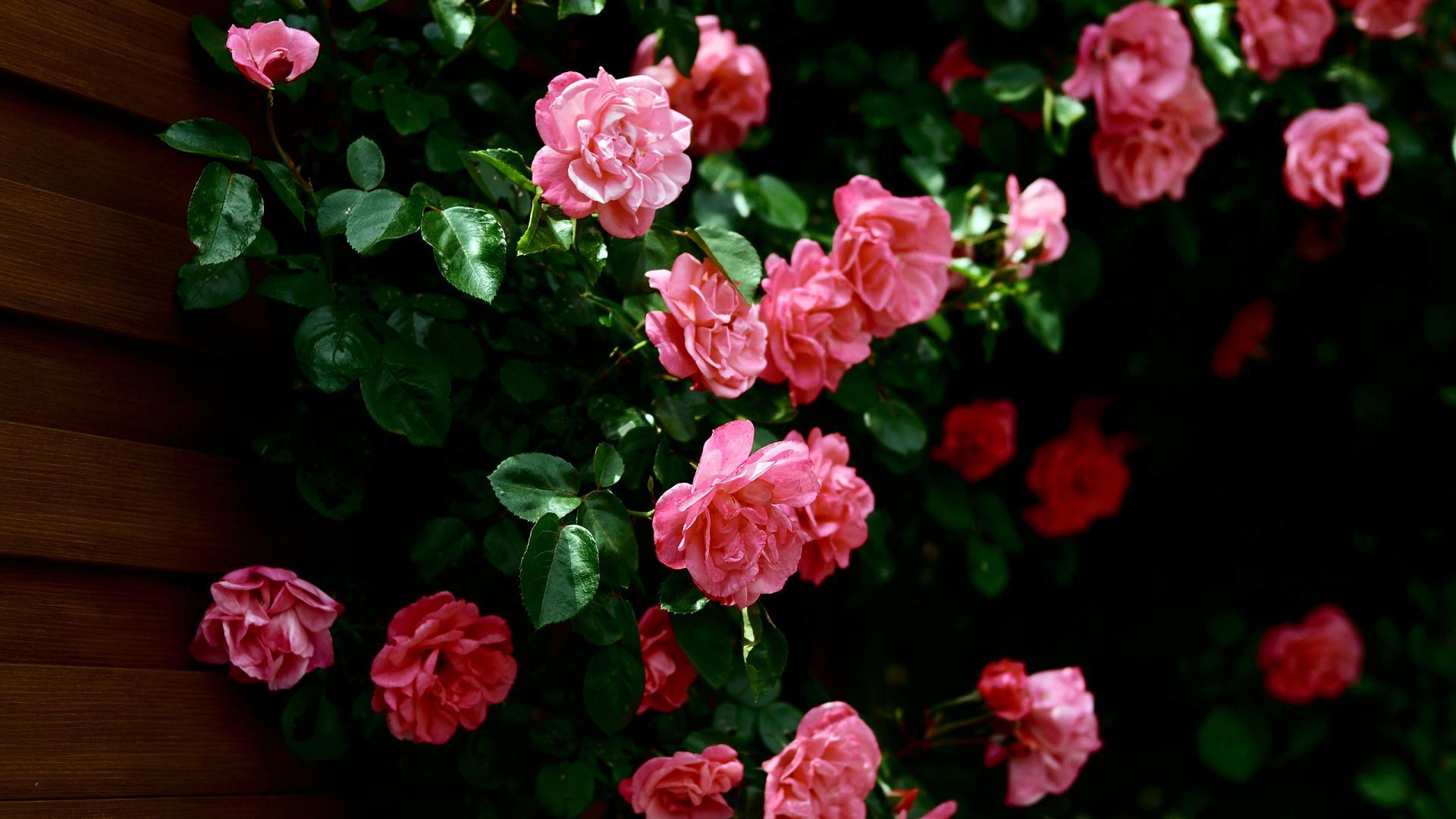 Flowers Pink Wallpaper HD