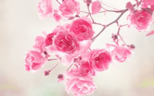Flowers Vintage Pink Wallpaper