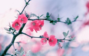 Flowers Wallpaper Downloads