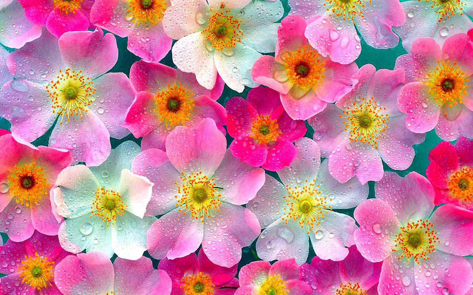 Flowers Wallpaper High Definition