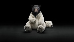 Funny Bear Wallpaper