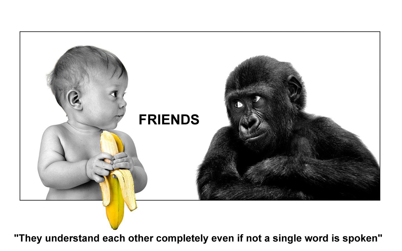 Funny Friends Wallpaper