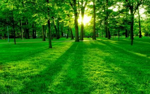 Green Nature Wallpaper HD