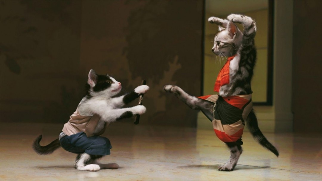 Karate Cat Wallpaper