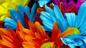 Multicolor Wallpaper Flower