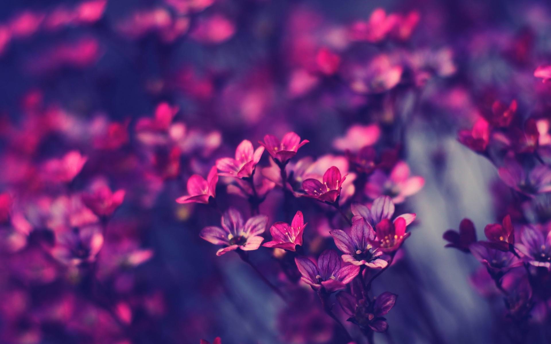 Purple Flower Image
