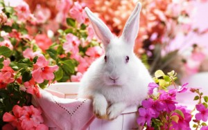 Rabbit Flower Wallpaper