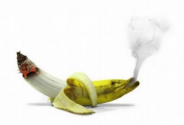 Smoking Funny Wallpaper