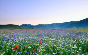 Summer Flowers Image Hd