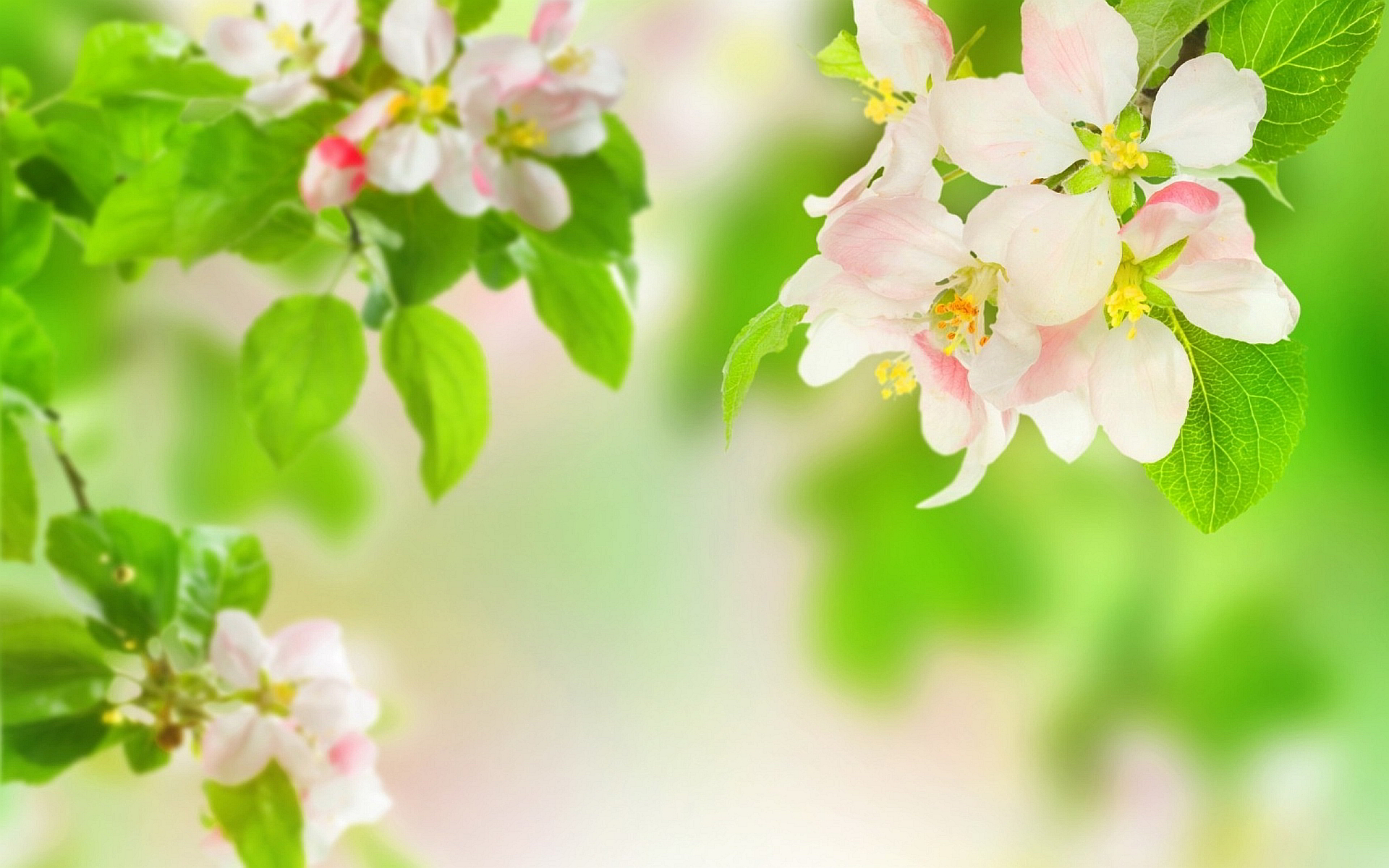 Summer Spring Flowers Wallpaper