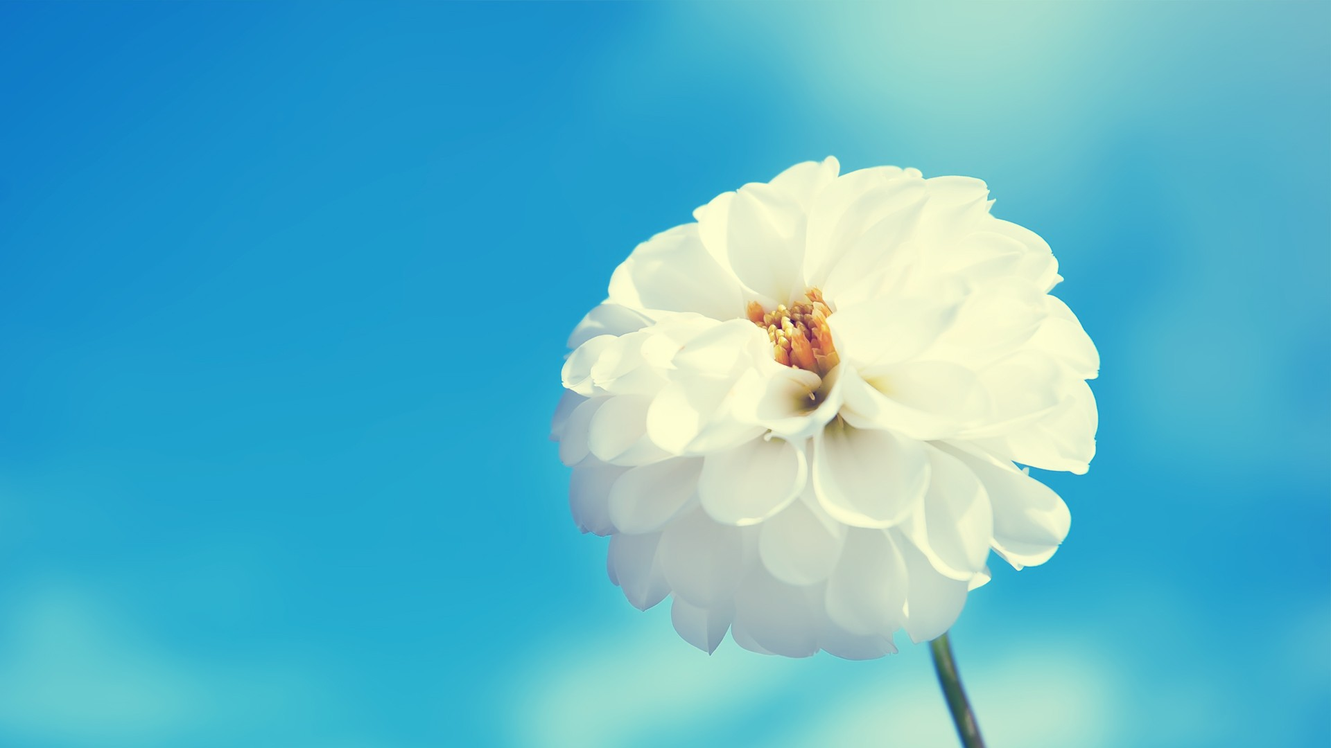 White Flower Alone Wallpaper