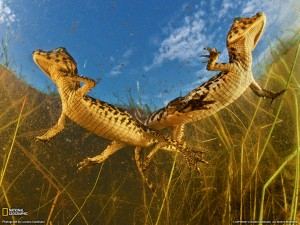 Animal Wallpapers Blogspot