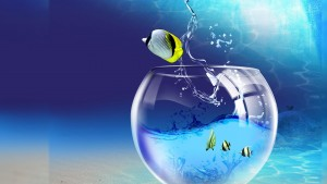Fish 3d Wallpaper