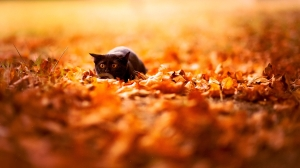 Cat In Nature Orange Wallpapers Background