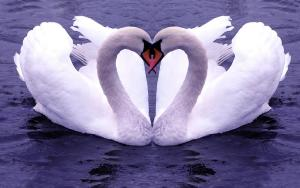 Love Animals Wallpapers HD