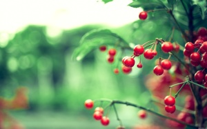 Plant Wallpaper Background Photos Photography