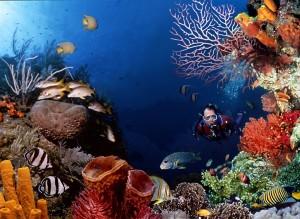 Undersea Corals Wallpapers HD