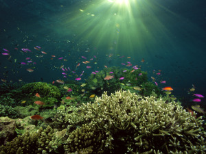 Underwater Wallpaper Photography
