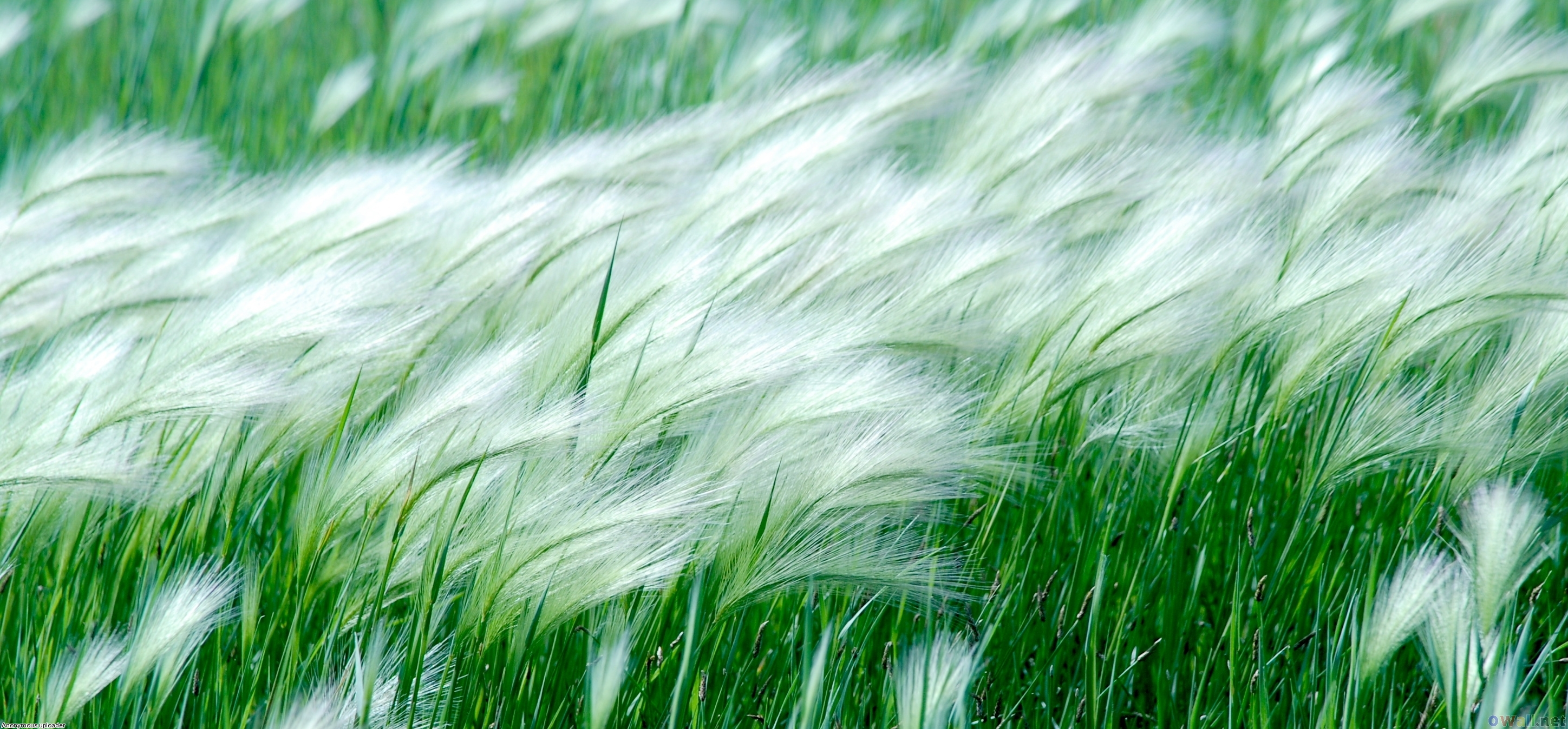 Wind Blowing Wallpapers Free Download
