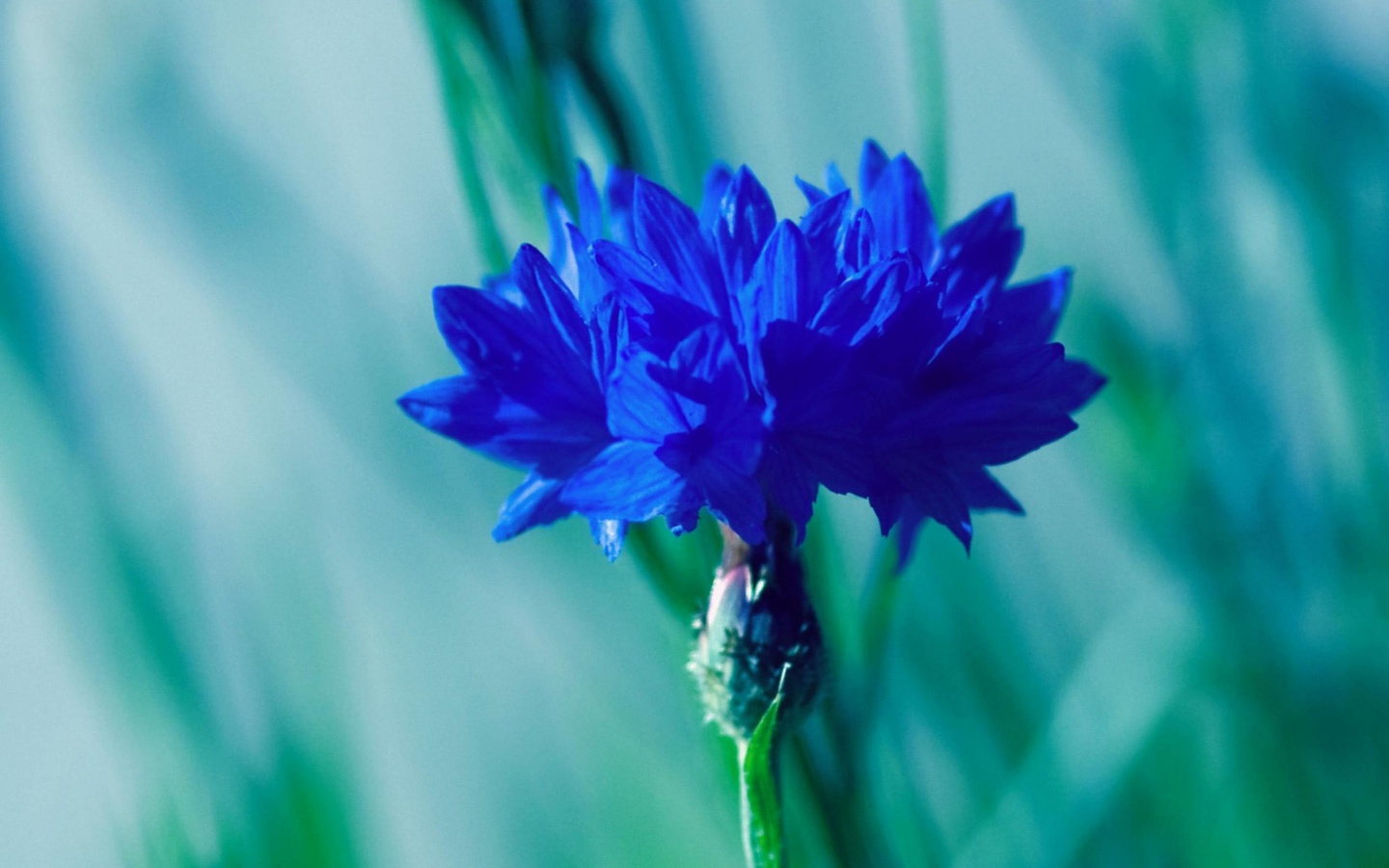Blue Flowers Wallpaper Beautiful