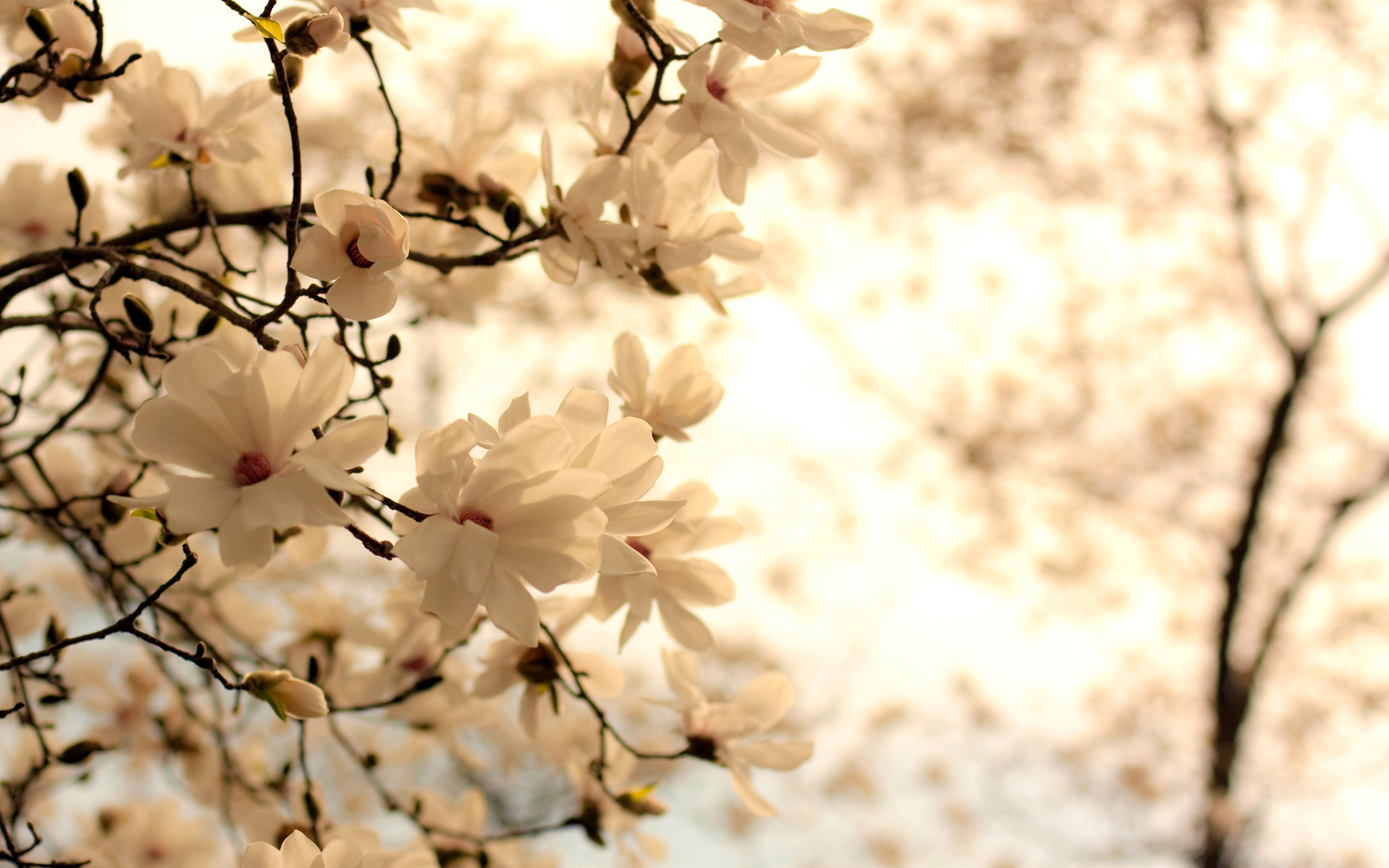 Flowers Random White Wallpaper 2560×1600