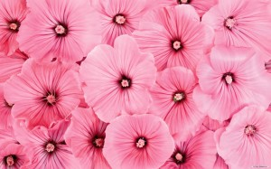 Pink Flowers Wallpaper High Resolution