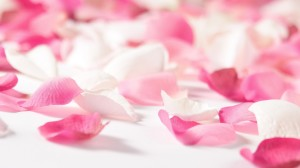 Pink Flowers Wallpaper Image Picture