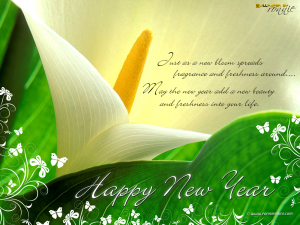 Firework Wallpaper Quotes New Year