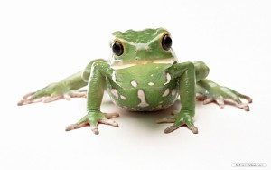 Frog Wallpaper High Quality