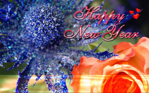 Happy New Year Celebration Wallpapers 2015
