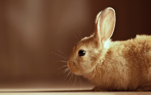 Brown Wallpaper Android Bunnies HD