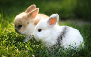 Bunnies Cute Wallpaper Beautiful Animals