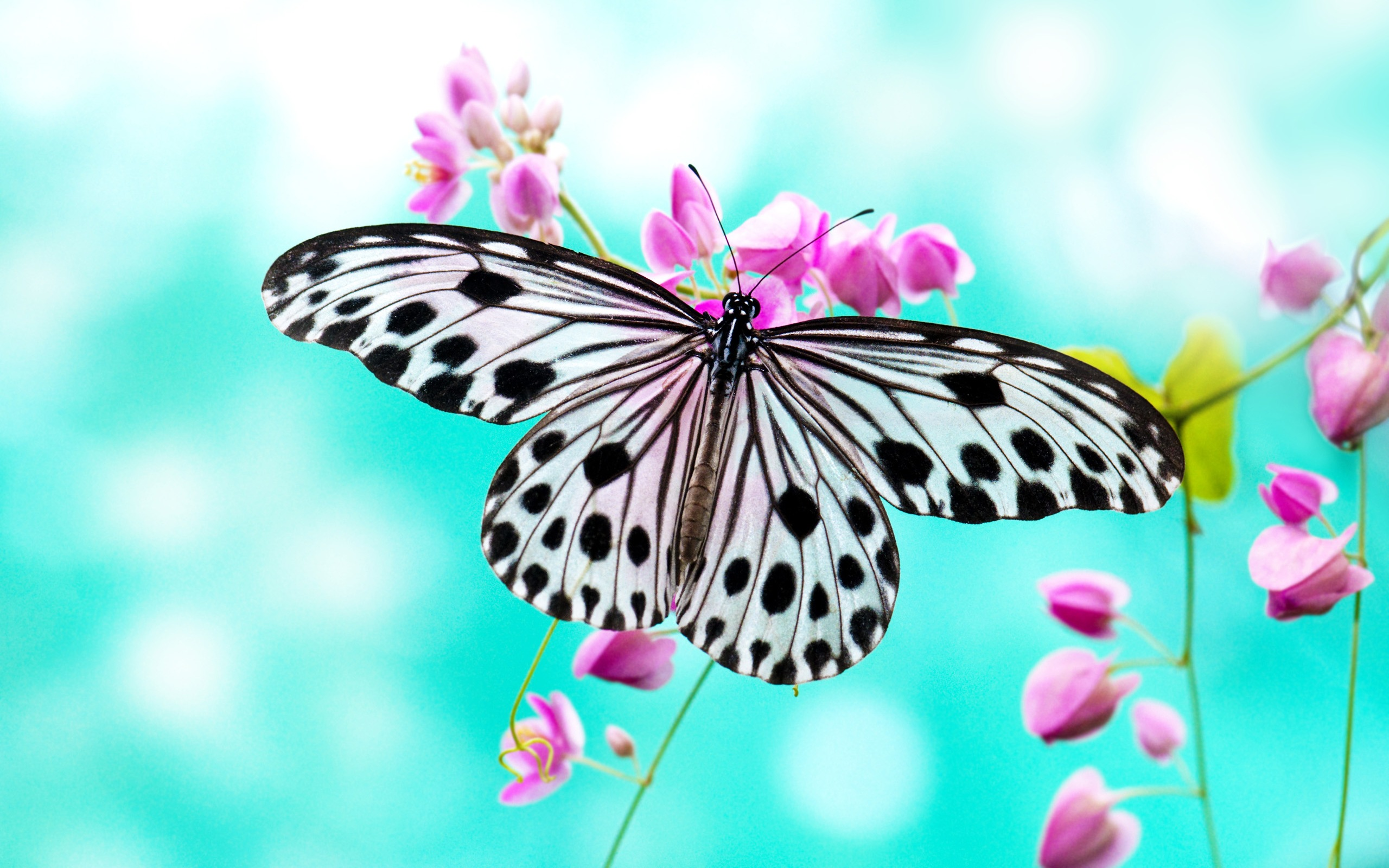 Cool Butterfly Wallpaper Free
