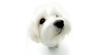 Dog Animals Wallpaper Android Phones